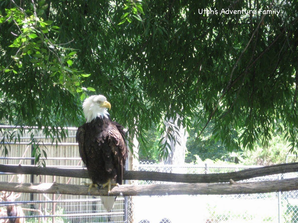 The bald eagle was so pretty!