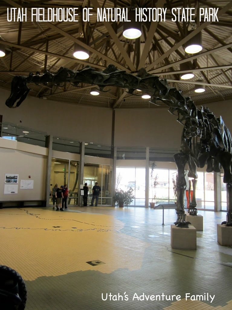 This huge fossil greets you as you enter the museum.
