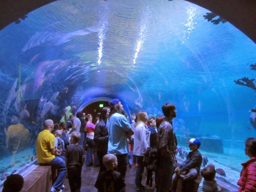 Loveland Living Planet Aquarium Utah 39 S Adventure Family