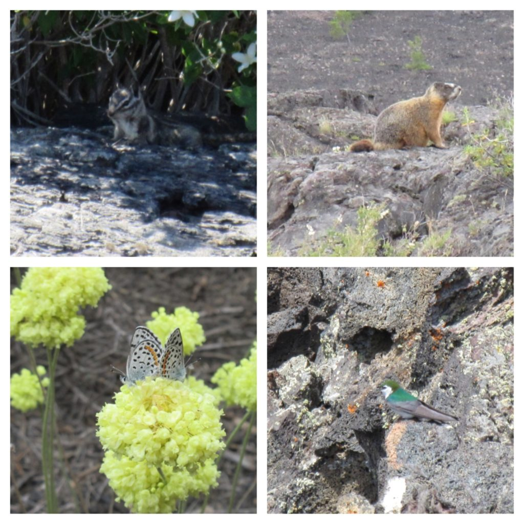 We loved finding wildlife throughout the park.