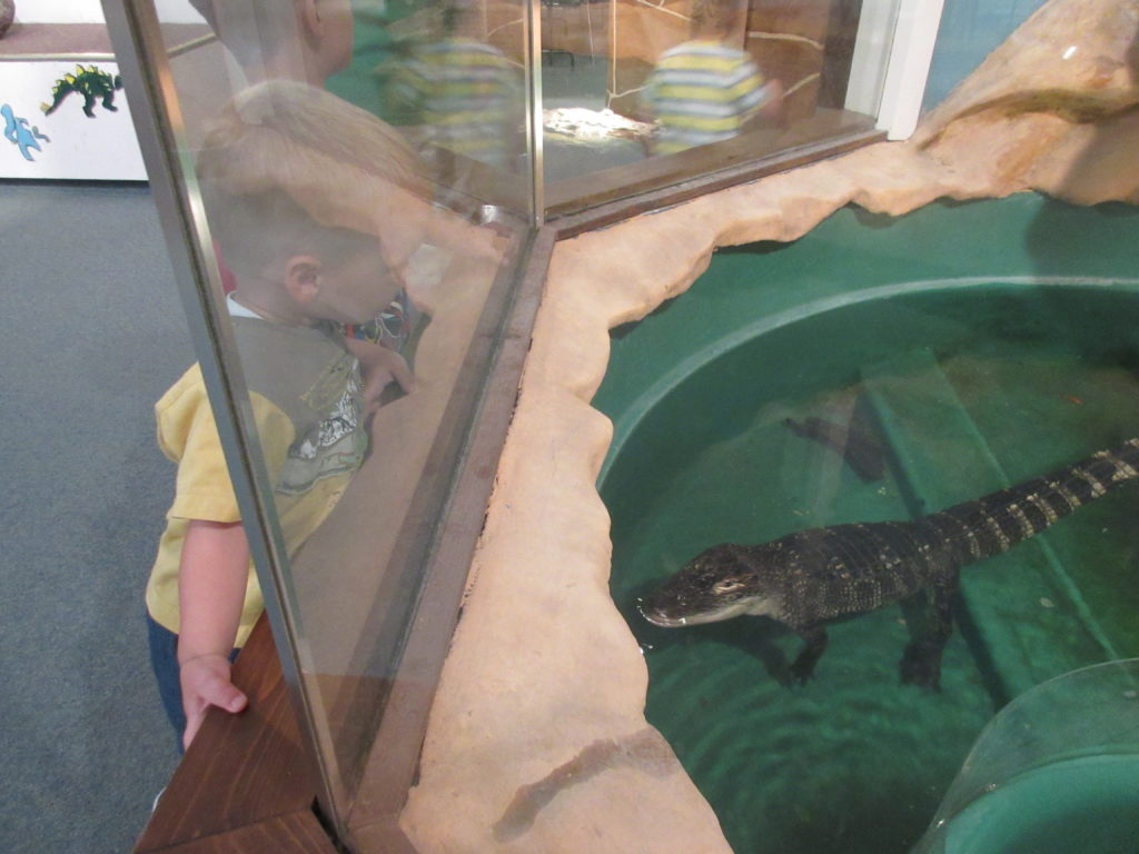 The dinosaur relatives were  fun to watch!