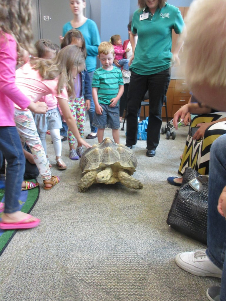 The tortoise was quite popular because he moved all around the room.