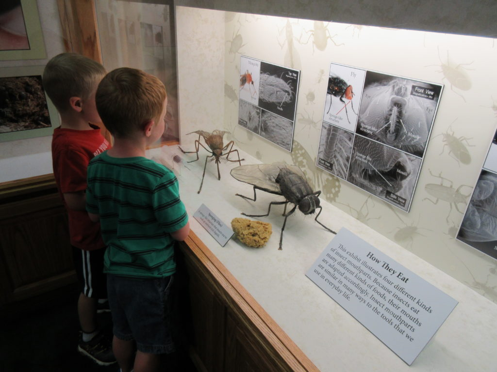 There were some new insect displays to look at.