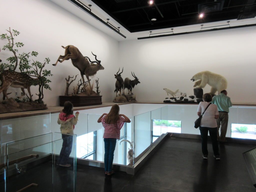 "Upstairs has lots of animals ""in action."" We love the natural light in this area."