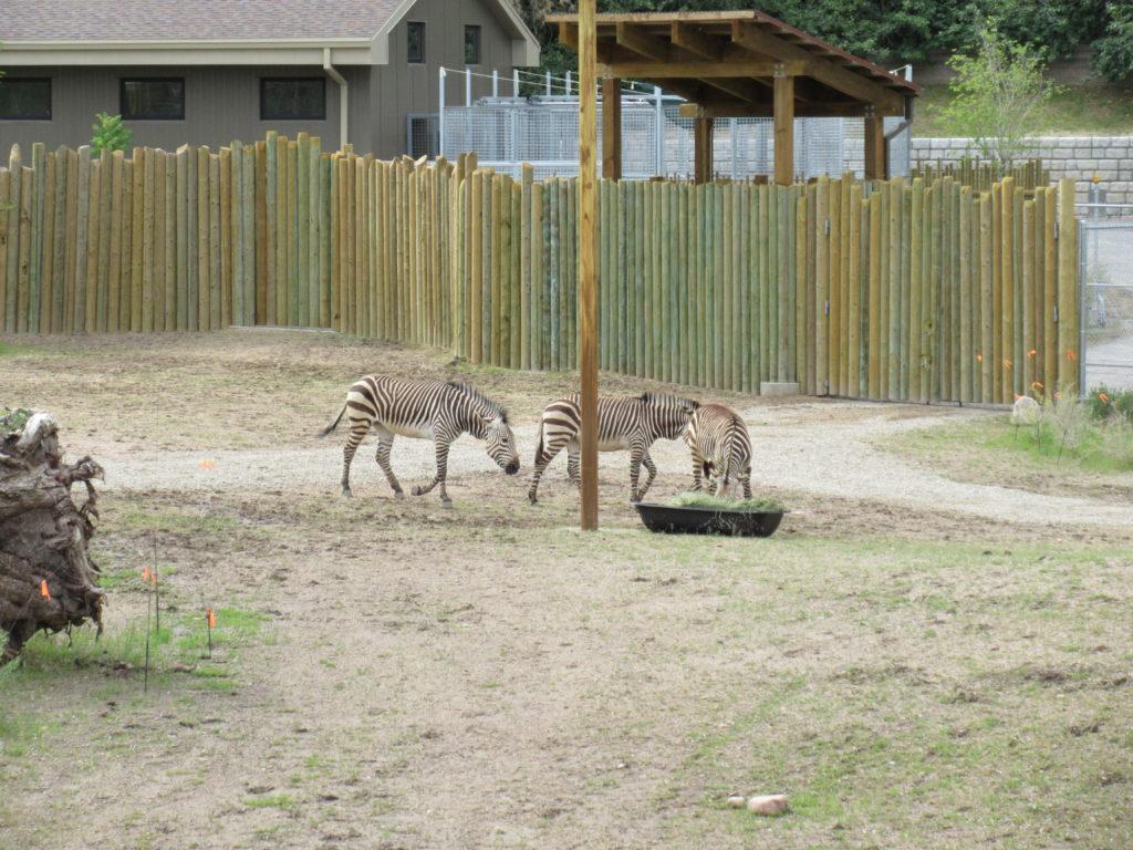We enjoyed watching the zebras.