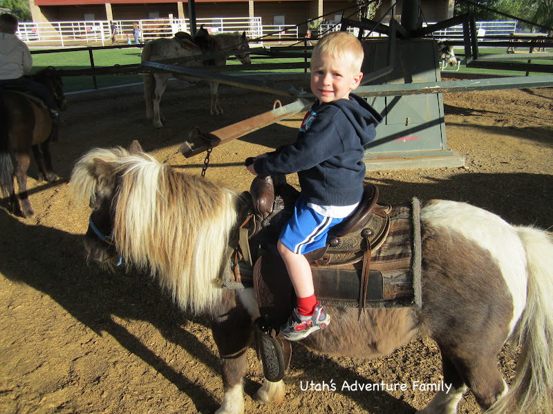 Farm Country Pony Rides are part of your admission.