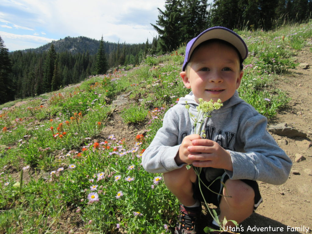 The wildflowers were beautiful along the trail even in hot July.
