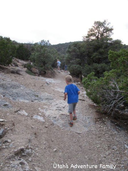 This trail is a little rocky and has a slight elevation change, but it is pretty simple.