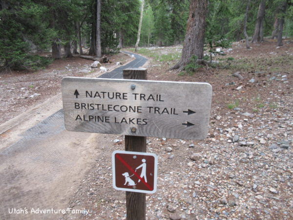 There are 3 trails at the top of Wheeler Peak Scenic Drive. Follow the signs.