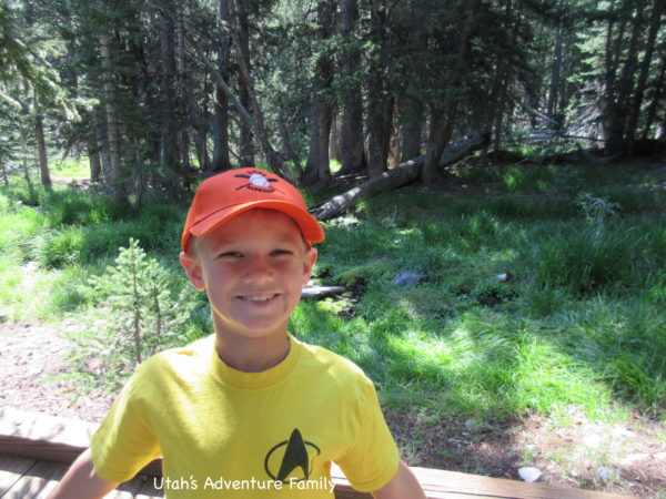 At the top of the Wheeler Peak Scenic Drive you find beautiful forests and streams.