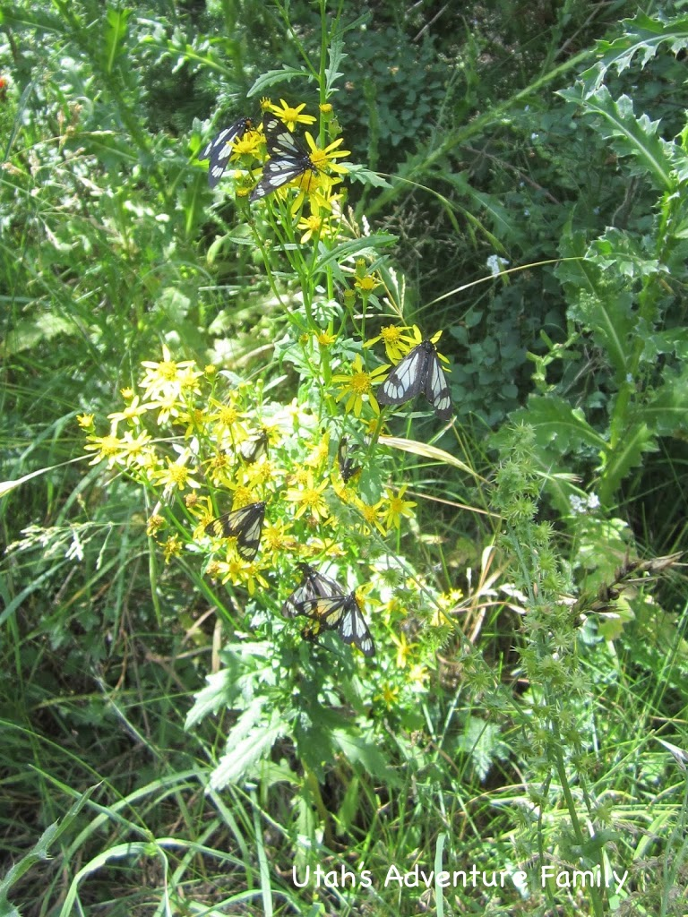 We saw at least 6 different types of butterflies.