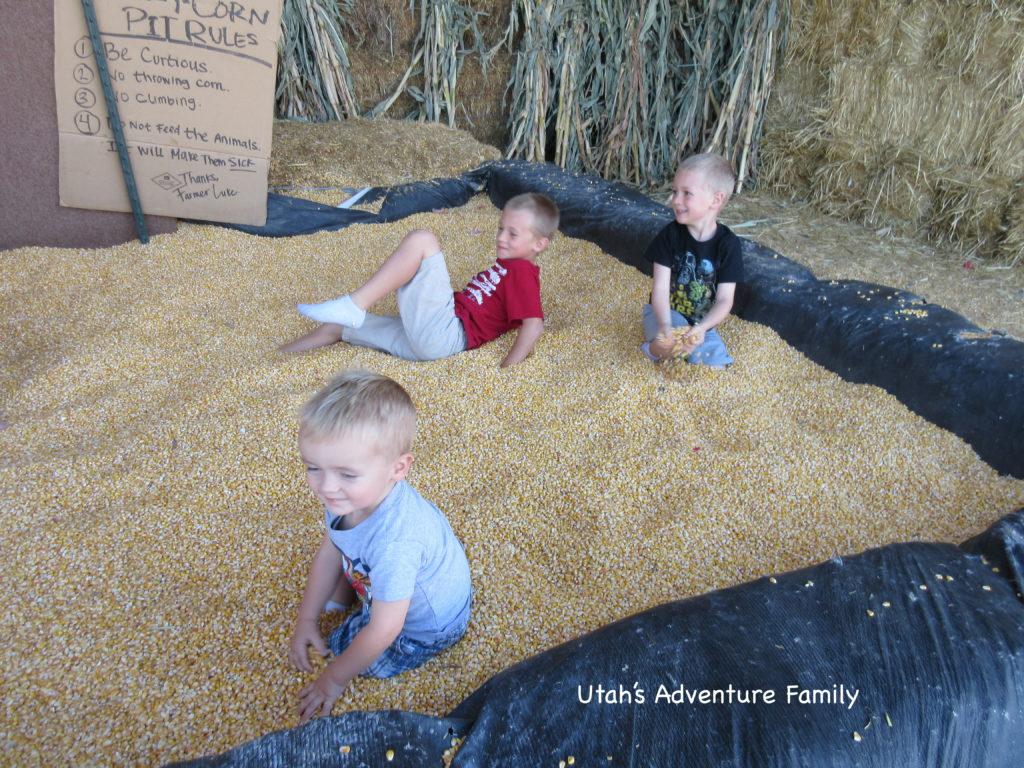 The crazy corn pit