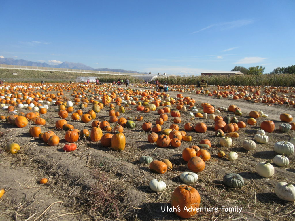 There were many different kinds of pumpkins.
