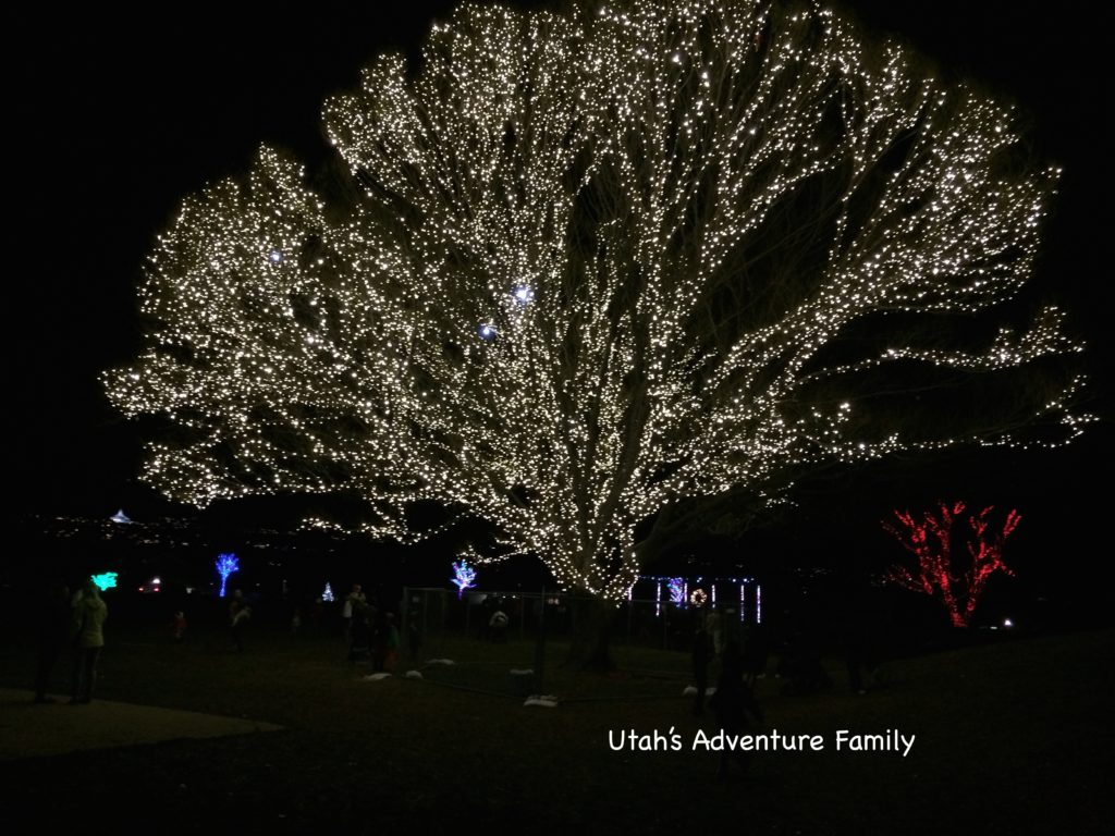 The huge glowing tree!