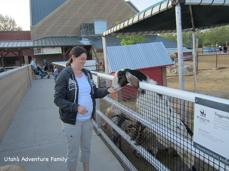 Pregnant me feeding the goats!