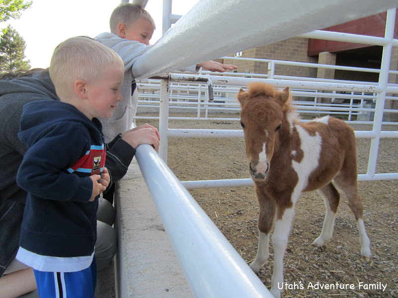 We LOVED this baby horse!