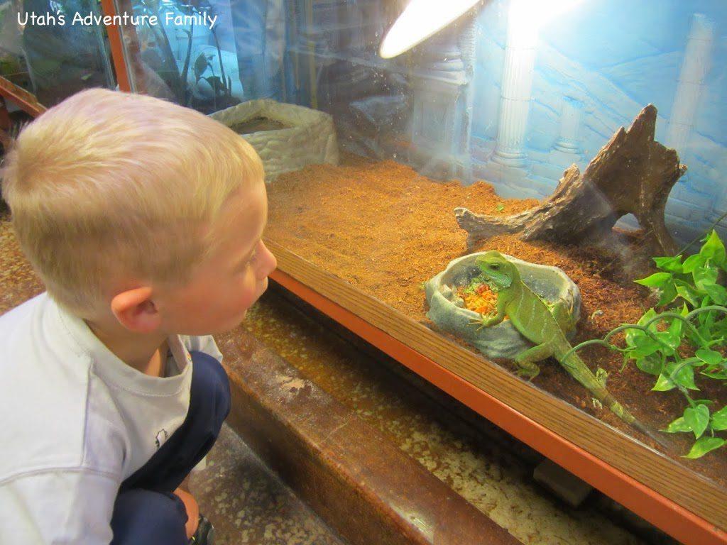 The lizard kept staring at him.