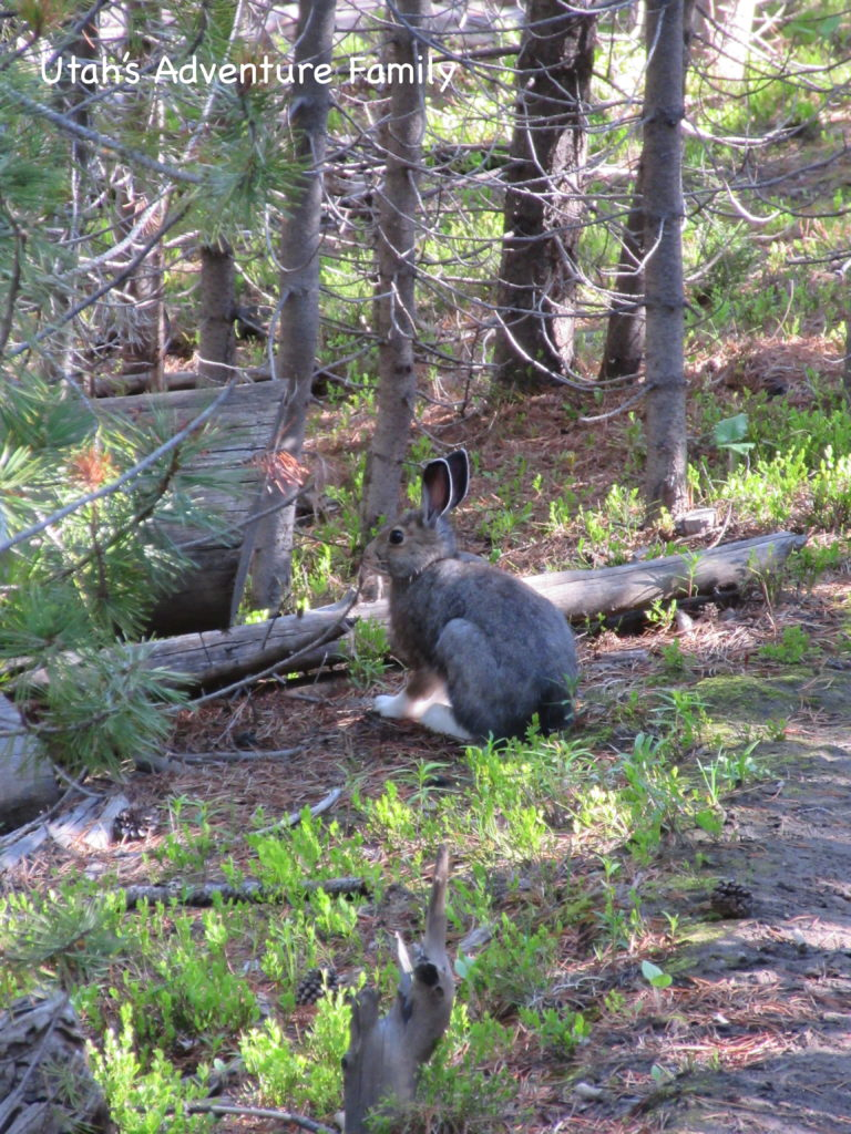 We usually spot a bunny, but it is usually on a hike. So get out of the car and go looking!