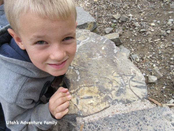 While you are waiting for the tour to start, look at the rocks in the rock wall near the sign...we found lots and lots of fossils in the rocks.