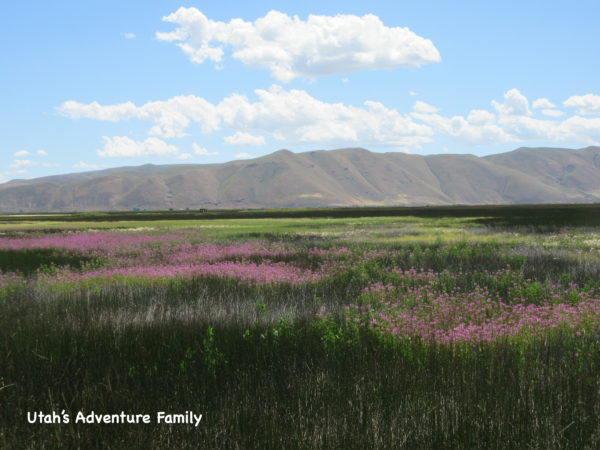 Bear Lake National Wildlife Refuge is very scenic.