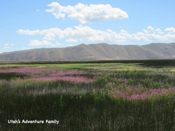Bear Lake National Wildlife Refuge is very scenic.