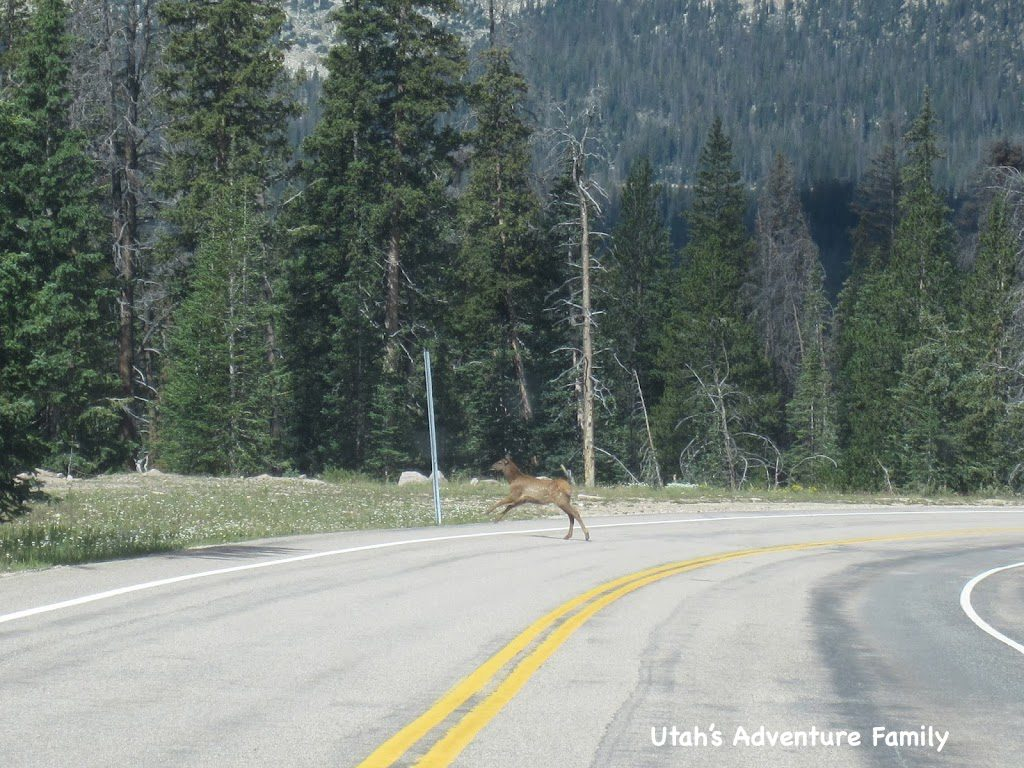 Baby Elk...A mom would cross followed by a baby.