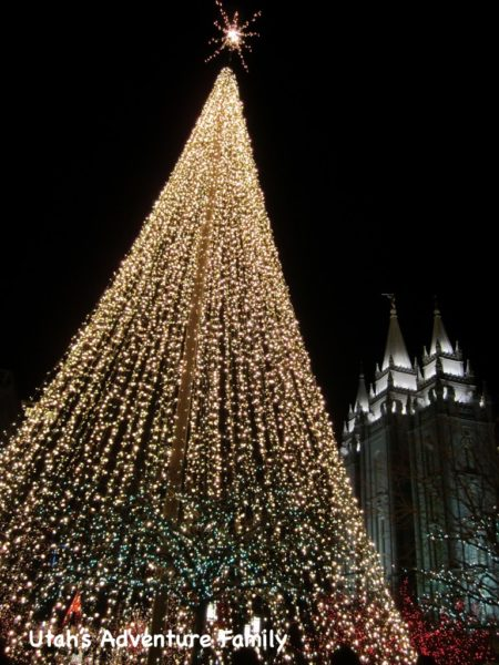 We loved this tall tree all lit-up!