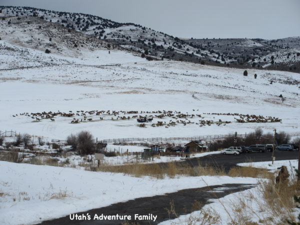 You can see the herd from the top of the hill by the visitor's center. They aren't far!