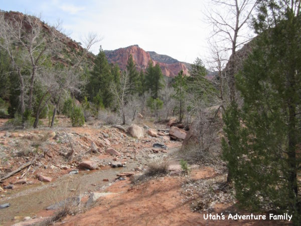 Taylor Creek Trail is a beautiful hike.