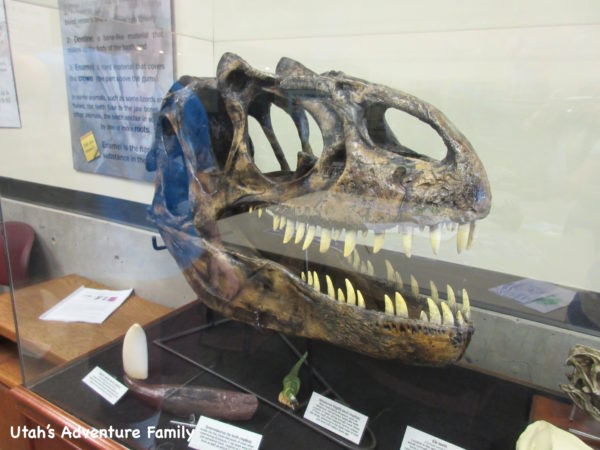 Fossil at St. George Dinosaur Museum