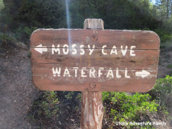 Mossy Cave 8