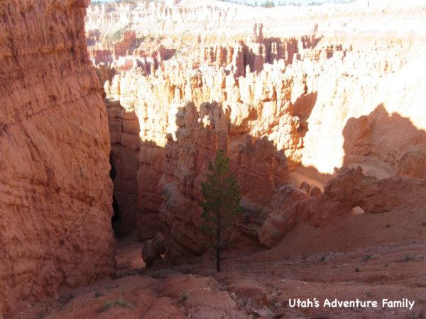 Navajo Loop 4