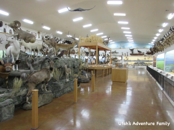 Bryce Canyon Museum 3
