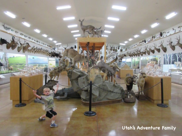 Bryce Wildlife Adventure Museum