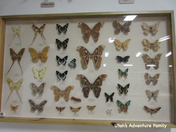 Bryce Canyon Museum 8