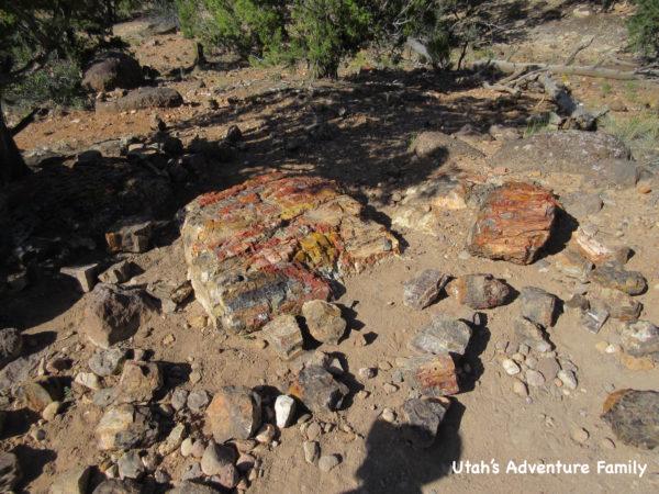 Escalante Petrified Forest 11