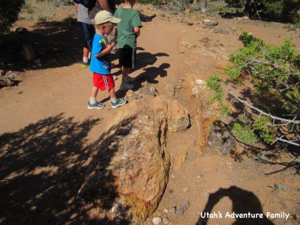 Escalante Petrified Forest 6