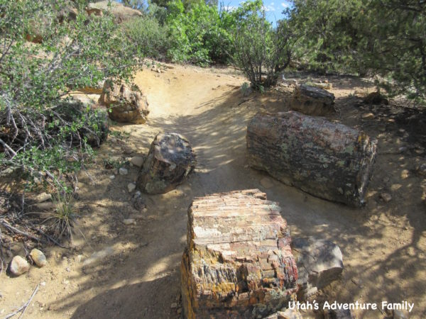 Escalante Petrified Forest 9