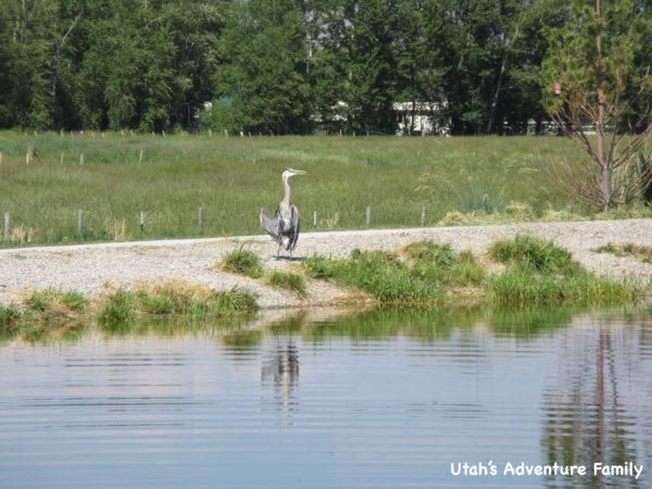 Garden City Pond 8