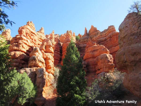 Red Canyon 1
