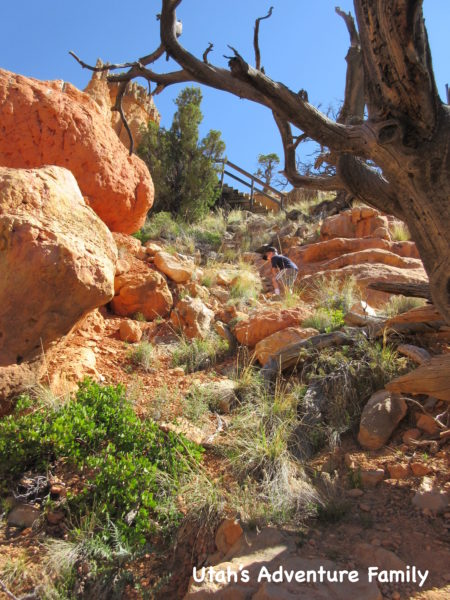 Red Canyon 21