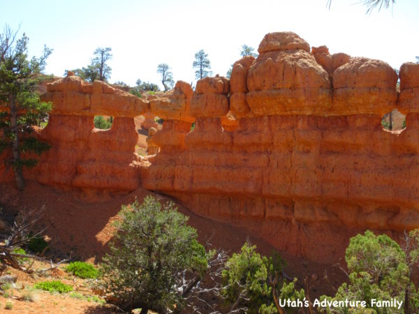 Red Canyon 24