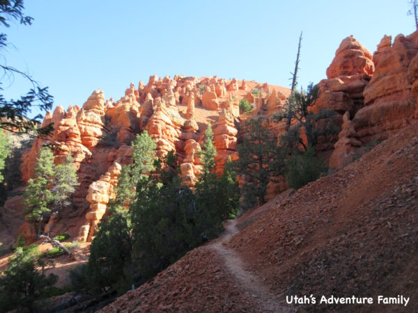 Red Canyon 8