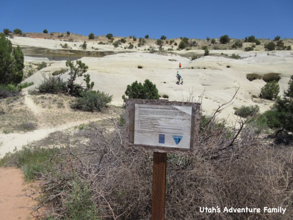 Twenty Mile Wash Dinosaur Tracks 1