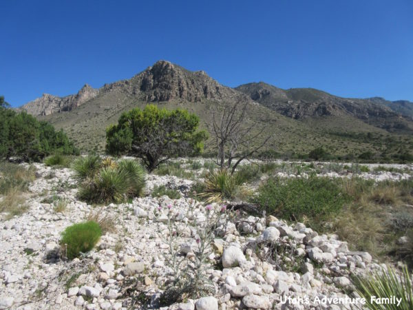 Guadalupe Mountains National Park 8