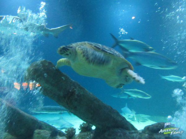 albuquerque-aquarium-10