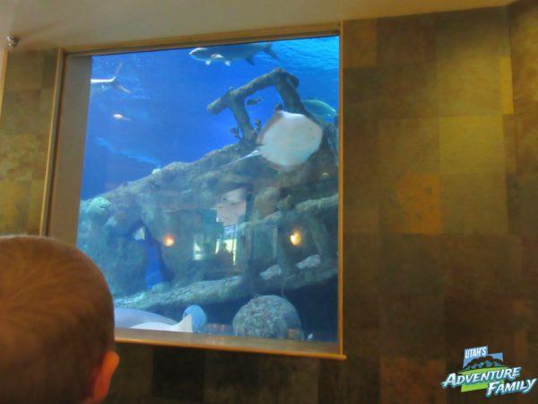 albuquerque-aquarium-2