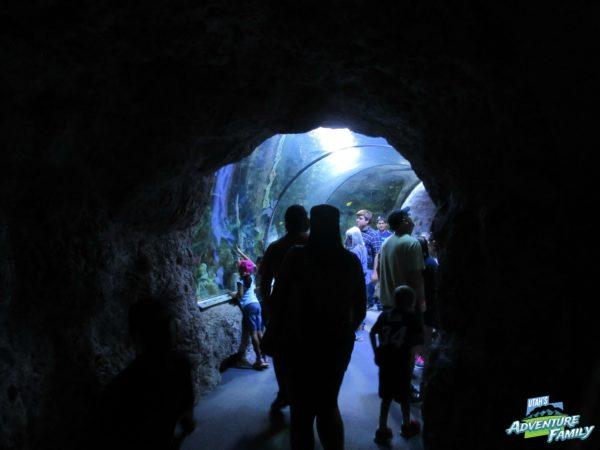 albuquerque-aquarium-6
