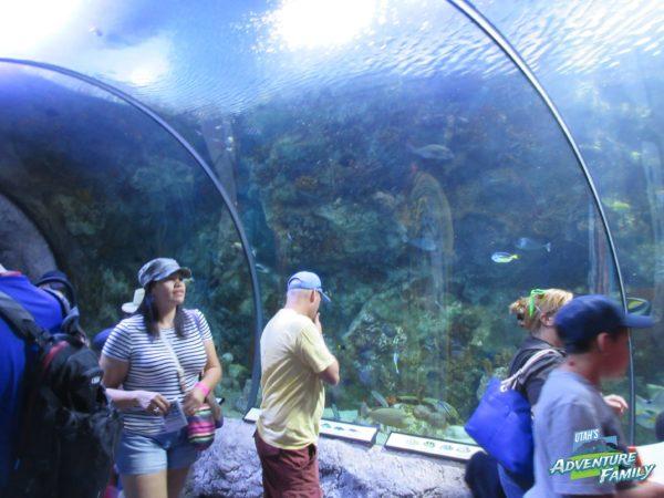 albuquerque-aquarium-7