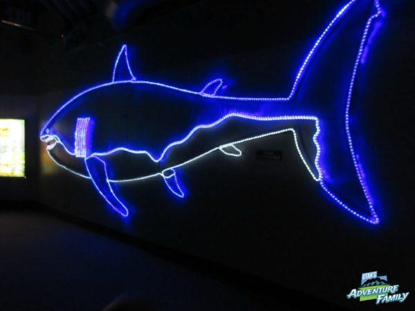 albuquerque-aquarium-8